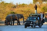 Africa, Botswana, Chobe National Park