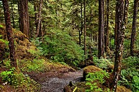 Lunch Creek hiking trail, Tongass National Forest, Ketchikan, Inside Passage AK, Alaska, USA  Largest national forest in the USA