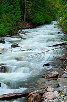 Canada, British Columbia, Yard Creek Provincial Park, Yard Creek