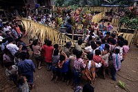 Indonesia, Sulawesi, Tana Toraja Region. ´Shaking the pig´ at Tongkonan traditional house blessing ceremony