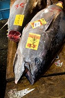 Japan, Tokyo, tuna on display at auction in Tsukiji Fish Market