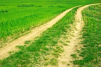 Dirtroad leading through an agricultural field