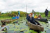 Guides and boatmen with poles in mokoro or makoro canoes, tourists in the back of the boats, Okavango Delta, Botswana, Africa
