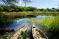 Makoros or mokoros, canoes on the Thamalakane river south of the outflow of the Okavango from the Okavango Delta, Maun city, Botswana, Africa