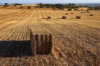 Stubble field  LLeida, Spain