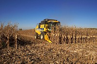 Combine-harvester on a field of maize