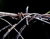 old rusted barbed wire covered in frost
