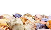 Sea Shell Background