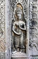 Devatas, Ta Prohm temple, Angkor, UNESCO World Heritage Site, Siem Reap, Cambodia, Southeast Asia, Asia