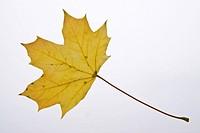 Herbst 081002 006