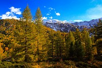 Alps, Alpine panorama, view, tree, mountain, mountains, mountain panorama, mountain point, Breithorn, trees, colors, cliff, rock