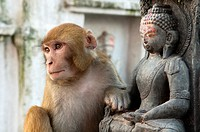 Who's the Buddha Monkey and statue at Swayambunath, the Monkey Temple in Kathmandu, Nepal