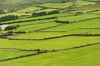 Beenoskee Hills, Dingle Peninsula, County Kerry, Ireland