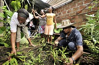 Women and man, Afro-Colombians, in a small herb garden for traditional medicinal herbs, in the Bajamar slum, Buenaventura, Valle del Cauca, Colombia, ...