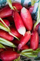 Fresh radish, close_up