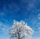 Frosted tree against sky