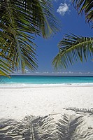Caribbean, Barbados, Carlisle Bay, beach, ocean, palm tree