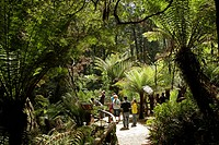 Tourists in the rain forest, Maits Rest Walk, Great Otway National Park, Great Ocean Road, Victoria, Australia