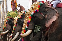 Hindu temple festival with elephants, Sri Mahadeva temple in Pattanakkad, Kerala, South India, South Asia