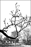 Black and white sketch with branch of tree ,digitally altered image