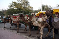 Camel carrier is popular for tourists who visit outside of the Taj Mahal The Taj Mahal sometimes called ´the Taj´ was built by Emperor Shah Jahan in m...
