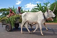 Farming in Cambodia