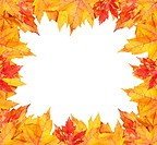 Colorful autumn leaves frame on white