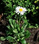 white flower in green field