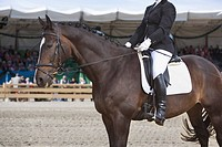 portrait of dressage horse and female rider