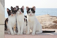 three young domestic cats _ sitting on wall