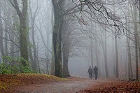 man and woman having a walk in a woodland path, in mist , winter  Kilmarnock Country Park, Ayrshire, Scotland