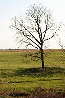 A stark leafless tree in the middle of a field