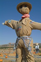 Scarecrow in pumpkin field, Los Angeles, California, USA