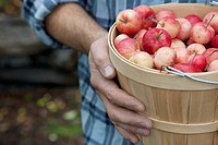 Man with basket of freshly picked apples