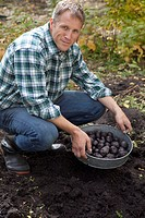 Man picking potatoes