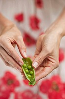 Woman splitting open a pea pod