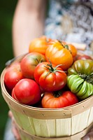 Woman holding a basket of heirloom tomatoes