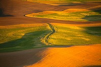 Wheat field in afternoon sun from Steptoe Butte (thumbnail)