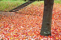 Autumn leaves on the ground (thumbnail)
