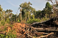 Deforestation, destruction of the Amazon rainforest, Mato Grosso, Brazil, South America