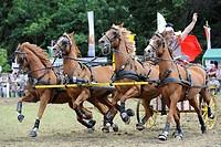 Roman wagon, chariot race, Ulli Schubert, Wenigenauma Ponyshow, Thuringia, Germany, Europe