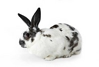 Image of soft spotty rabbit isolated over white background