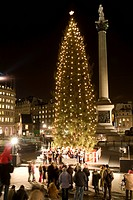 Christmas tree, Lord Nelson's Column in Trafalgar Square, London, England, United Kingdom, Europe