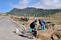 Community development, infrastructure development, road construction, Cata_Village in the former homeland of Ciskei, Eastern Cape, South Africa, Afric...