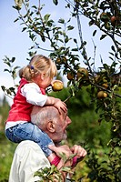A grandfather carrying his granddaughter on his shoulders, picking apples