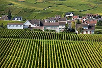 France, Marne, Champagne Region, Oger, town and vineyards, autumn