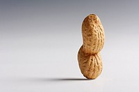 roasted peanut