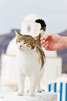 Europe, Greece, Cyclades, Santorini, Human hand trying to touch cat (thumbnail)