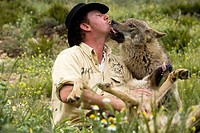 Daniel Weigend, playing and getting pampered by acceptance of its Iberian wolves, Wolf park, Antequera, Malaga, Andalusia, Spain