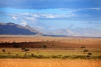 Savanna, Kidepo national park, Uganda, East Africa
